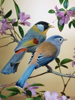 Silver-Eared Mesias (Leiothrix Argentauris) - Creator Created Birds and said to us, in HIS last book The Noble Qur'an: DO YOU NOT SEE HOW I HAVE CREATED BIRDS? WOULD YOU NOT THEN BELIEVE?: Mesias Leiothrix, Nature, Poultry, Silver Eared Mesias, Pretty