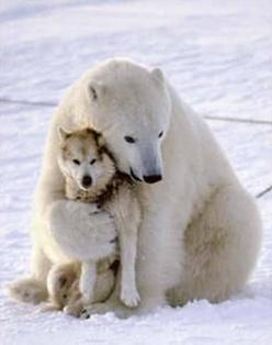 story of how this wild polar bear & (chained) sled dog became friends.  There is a TED talk about the importance of play that features it and a series of photos about this true story