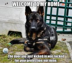 the caption on this photo is rather dumb and corny but the gshep has the most rich and gorgeous heavy markings!: Refrigerator Magnets, Animals, German Shepards, German Shepherds, Shepherd Dogs, Funny German Shepherd, Gsd
