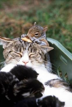The Cat and Her Squirrel | The 21 Most Touching Interspecies Friendships You Never Thought Possible: Cats, Animal Friendship, Animals, Squirrels, Baby Squirrel, Interspecies Friendship, Hilarious Photo, Adorable Animal, Furry Friends