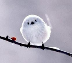 Tiny bird....don't know who you are but you are really cute!: Animals, Cute Bird, Creatures, Beautiful Birds, Things, Fluffy Bird