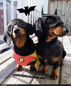 weenies. crusoe and his brother oakley. a.k.a. batdog and robin