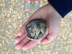 """""""How I first found him. Freezing and hardly moving"""" click through for the entire set of images, they're amazing! /via Meredith: Photos, Babies, Animals, Dogs, Squirrels, Guy, Baby Squirrel, Pet, Freezing"""