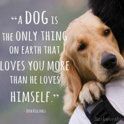 A dog is the only thing on earth that loves you more than he loves himself: Love You, Dogs, Quotes, Pet, So True, Friend, Animal, Golden Retriever