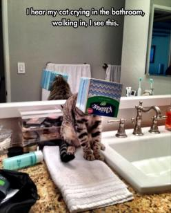 Attack Of The Funny Cats: Cats, Animals, Funny Cat, Funnies, Funny Animal