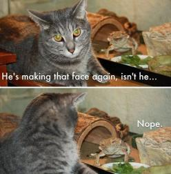 bahahaha omg too cute !: Cats, Funny Animals, Faces, Funnyanimal, Funny Stuff, Funnies, Bearded Dragon