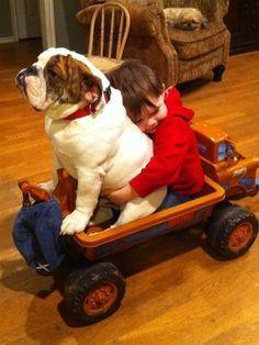 Bulldog and friend :)