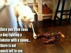 dog fighting lobster: Animals, Dogs, Dog Fighting, Lobsters, Funny Stuff, Funnies, Humor