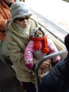 Dog who is ready for a long, cold commute.