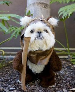 Ewok Dog. Star Wars costume. @YoungDumbAndFun: Costumes, Animals, Dogs, Pet, Star Wars, Shih Tzu, Ewok Dog, Starwars