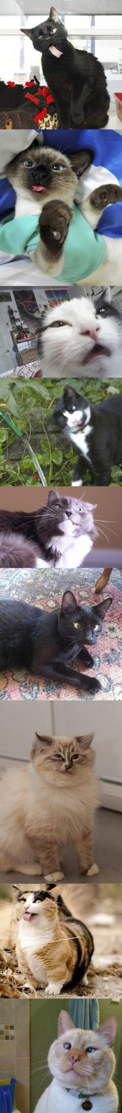 Funny cat faces: Funny Cats, Cat Derp, Funny Faces, Derpy Cats, Cat Faces, Drunk Cat, Animal