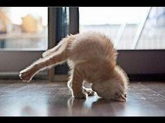 Funny Cats...I cried laughing