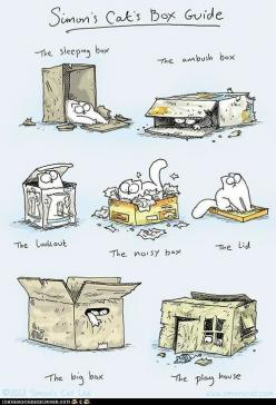 haha my cat does all of these: Cats, Simons Cat, Cat S Box, Funny, Cat Boxes, Simon S Cat S, Animal