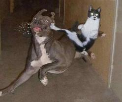 i LOVE the spit flying out of the dog's mouth!: Cats, Cat Norris, Animals, Funny Stuff, Funnies, Funny Animal, Dog