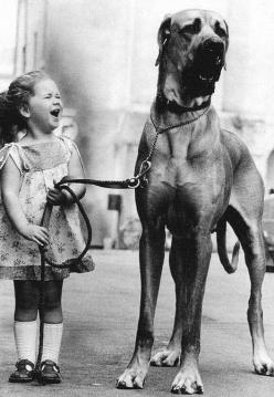 I want a great Dane!!: Picture, Great Danes, Little Girls, Animals, Photo, Friend, Bigdog, Big Dogs, Kid