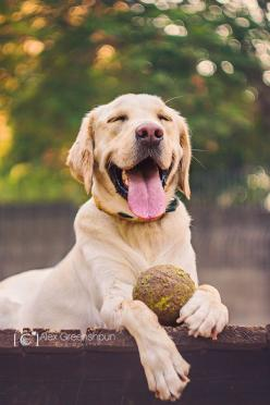 Introducing the happiest puppeh in the world....with his/her prized tennis ball. If you're ever having a bad day, just look @ this picture.: Animals, Happiness Is, Dogs, Muddy Tennis, Tennis Ball, Friend