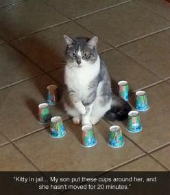 Kitty prison. I am still laughing.: Cats, Kitty Jail, Animals, Funny Cat, Funny Pictures, Funny Stuff, Funnies, Funny Animal