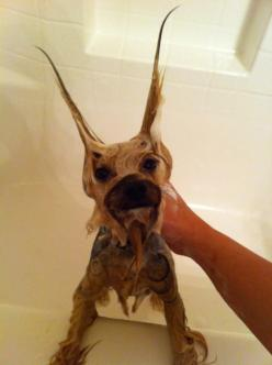 :-)Momma!  I am cold!  Put the camera down.  I am ready for some serious pampering.: Funny Dogs, Petspawsdogs Thecuties, Time Yorkie, Yorkies Doglovers, Bathtime, Funny Stuff, Yorkie Bath, Animals Birds, Bath Time