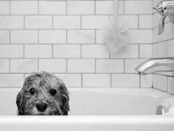 No way either one of my dogs would sit and look at me...I would be soaked as would my camera!: Doggie, Animals, Dogs, Pets, Puppy, Photo, Friend, Bath Time