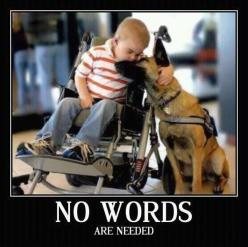 No words are needed: Animals, Friends, Dogs, Sweet, Pet, German Shepherd, Photo
