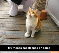 Oh, that poor kitty!  Just look at that little paw (Ok.  It's not so little now, but you get what I mean).  :): Cats, Funny Animals, Bees, Poor Kitty, Funny Stuff, Funnies