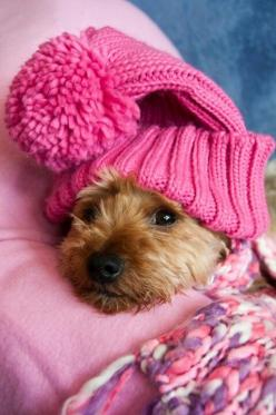 pink, dog, dogs, pet, pets, puppy, puppies, warm, winter, december, cute animals, cute animal: Pink Dog, Animals, Sweet, Dogs, Pet, Adorable, Puppy