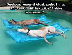 Random Pictures Of The Day - 30 Pics: Animals, Greyhound Rescue, Life, Dogs, Greyhounds, Pool, Pet, Funny