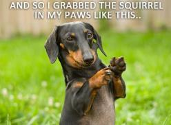 That's the way my doxie does it, LOL: Dogs, Pet, Doxie, Animal