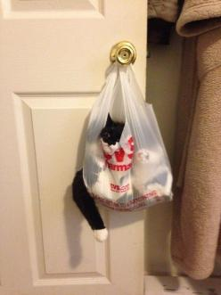 The cat who took on a bag that was too smart for him: | 24 Cats Who Realize They've Made A Huge Mistake: Animals, Funny Cats, Life Choices, Crazy Cat, Funnies, Dr. Who, Kitty, Bags