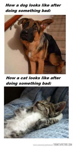 the difference between cats and dogs! dogs care more :P <3 cats dont give a damn :): Funny Animals, Cats, Dogs, Pet, So True, Humor