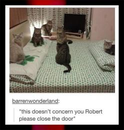 This doesn't concern you Robert, please close the door. XD: Cats, Funny Animals, The Doors, Late Night, Funny Stuff, Funnies, Cat Meeting, Doesn T Concern