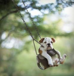 This just cracks me up!: Animals, So Cute, Bulldogs, Pet, Swings, Puppy, Smile