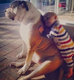 ❤ While ~TEX isn't a bully fur baby ~but his heart is! This capture of love is soooo very tender.  Posted on ELLEN's web site KIDS  PETS.  Post  Katie J. from Longwood, Florida sent in this photo of Brady and Tex. Has there ever been a cuter photo