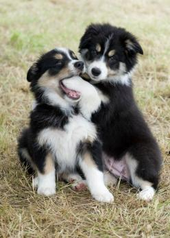 "Grodie, good name for a pup...Gag me with a spoon...Frank Zappa and daughter Moon Unit had a song back in the 80's, ""Valley Girl."" It's hilarious and a solid groove...This is Razzle & Buzz - Border Collies:"