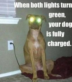 """When both lights turn green, your dog is fully charged."" ~ Dog Shaming shame - - Funny Pictures Of The Day – 101 Pics: Animals, Dogs, Funny Pictures, Funny Stuff, Funnies, Funny Animal"