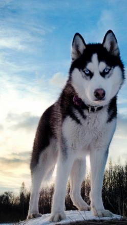 "Article : ""10 Truths About Walking Your Dog"" and Beautiful Gallery 