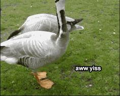 Aww Yiss | 32 GIFs Guaranteed To Make You Laugh Every Time