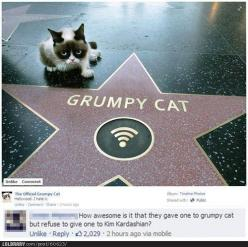 Because Grumpy Cat has talent - and Kim K. does not.....: Cats, Animals, Grumpycat, Stars, Funny Stuff, Grumpy Cat, Walk