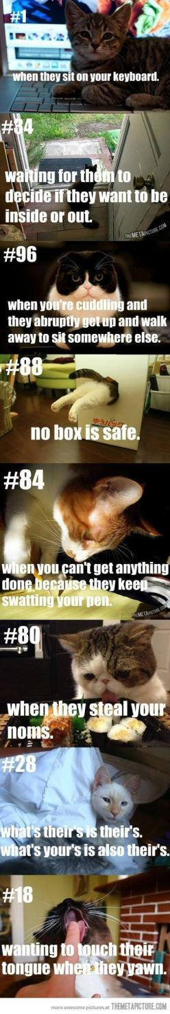 Cat people problems…: Cats, Kitty Cat, Stuff, Crazy Cat, Owner Problems, Animal, Cat Lady
