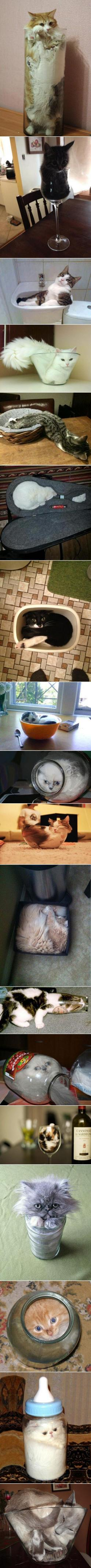 Cats Are A Liquid (compilation): Fit, Kitty Cats, Funny Cats, Container, Proof Cats, Crazy Cat, Liquid Cats, Animal