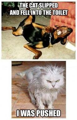 Certainly not cat humor: Cats, Funny Animals, Dogs, Pet, Funny Stuff, Funnies, Humor