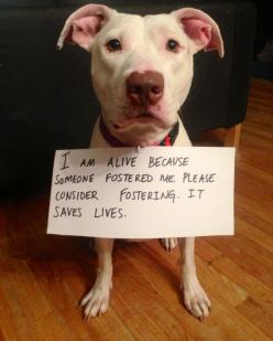 COCOA SAYS FOSTERING SAVES LIVES!: Animal Rescue, Help, Animals, Dogs, Pet, Foster, Saves Lives