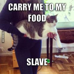 Funny cat: Animals, Food Slave, Funny Cats, Fat Cat, Crazy Cat, Funnies, Funny Animal, Cat Lady