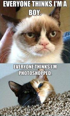 Grumpy cat is a girl?!: Cats, Catproblems, Internet Cat, Girl, Grumpycat, Cat Problems, Funny, Grumpy Cat, Animal