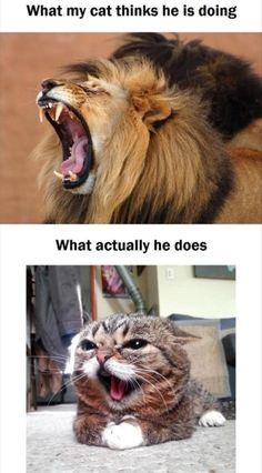 Grumpy Cat Pictures With Captions | Funny Angry Grumpy Kitten Meme | Pelauts.Com: Funny Things, Funny Cats Memes, Kittens Funny Memes, Kitten Meme, So True, Cat Memes Funny, Grumpy Cat, Funny Animals With Captions, Funny Cats With Captions