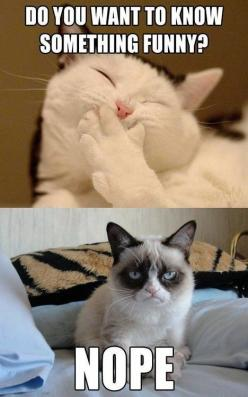Grumpy cat quotes, grouchy quotes, grumpy cat jokes, grumpy cat humor, grumpy cat pictures …For the best humor pics and memes funny visit  www.bestfunnyjokes4u.com/lol-funny-cat-pic/: Cats, Animals, Grumpycat, Funny Stuff, Funnies, Funny Animal, Grumpy Ca