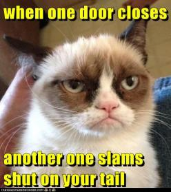 grumpy cats philosophy: Cute Cats, Cat Grumpycat, Babycats862 Blogspot, By, Grumpycat Baby, Cats Baby, Baby Cats, Grumpy Cats
