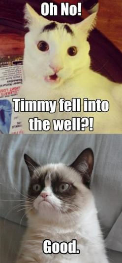 #GrumpyCat #meme For more Grumpy Cat quote, humor and meme visit www.pinterest.com/erikakaisersot: Dogs And Cats, Grumpy Cat Quotes, Pet, Funny Grumpy Cats, Grumpycat Memes, Grumpy Cat Meme, Cats Quotes, Animal