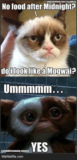#GrumpyCat #meme For more Grumpy Cat stuff, gifts, and meme visit www.pinterest.com/erikakaisersot: Funny Animals, Cats, Gremlins Inside, Grumpy Kitty, Funny Stuff, Even Grumpycat, Grumpy Cat, Cat Mogwai
