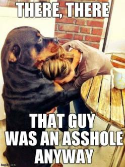 haha awww: Animals, Dogs, Pet, Quote, Funny Stuff, Funnies, Friend